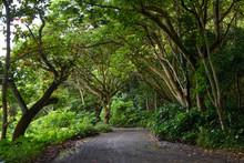 Road To The Beach On The Waipio Valley Floor On The Big Island Of Hawaii.