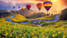 Colorful Hot Air Balloons Flying Over Mexican Sunflower Field With Sunset, Mae Hong Son Province, Thailand...
