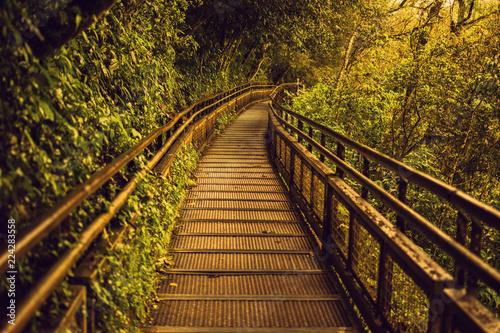 Foto op Canvas Weg in bos Metal walkway towards Iguazu Falls nature in Argentina in spring