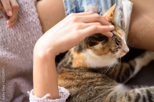 Foto  Cute Calico Cat Being Petted By Young Woman