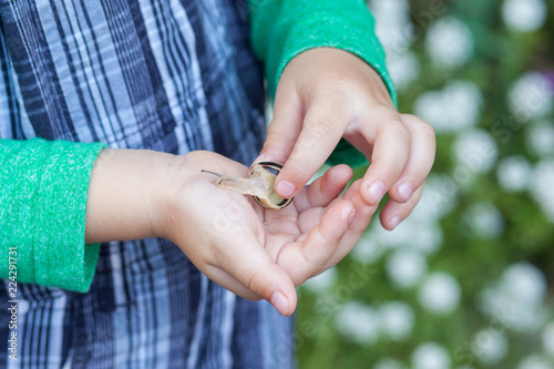 Child boy showing a snail in his palm. Selective focus