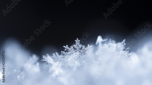 Fotomural  snowflake in the snow, winter
