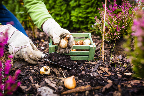 Photo sur Toile Jardin Autumn planting bulbs of flowers in the garden.