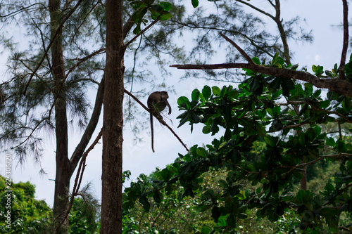 Foto op Plexiglas Aap Monkey on the Trees, monkey in natural habitat, rain forest and jungle.