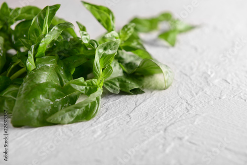 Fresh green basil on light background