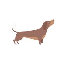 Purebred Brown Dachshund Dog Vector Illustration On A White Background