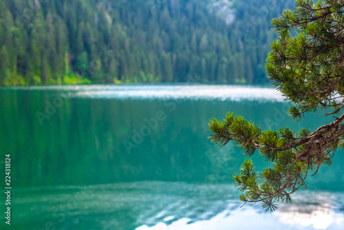 Canvas Prints Green coral beautiful glacial Black Lake and pine branches in Montenegro