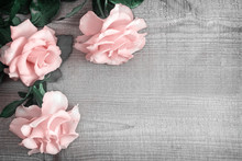Luxury Pink Roses On Light Wood Background