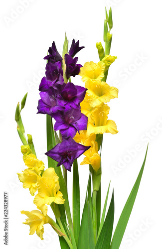 Fotografering Beautiful bouquet of multicolored gladiolus flowers purple and yellow isolated on white background