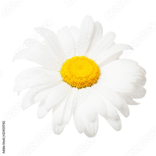 Poster Madeliefjes One white daisy flower isolated on white background. Flat lay, top view