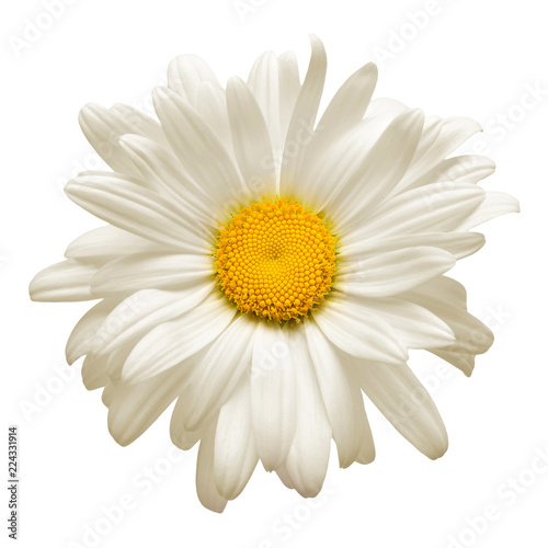 In de dag Madeliefjes One white daisy flower isolated on white background. Flat lay, top view. Floral pattern, object
