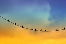 Black Silhouette Of Birds On The Cable.