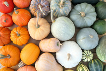 Colorful Varieties Of Pumpkins...