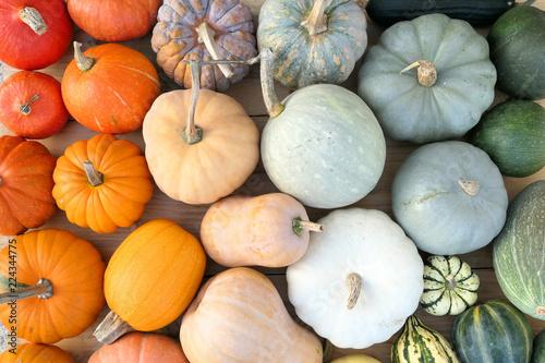Obraz Colorful varieties of pumpkins and squashe - fototapety do salonu