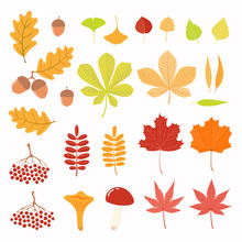 Big Autumn Set With Leaves, Berries, Acorns, Mushrooms. Isolated Objects On White Background. Hand Drawn Vector Illustration. Flat Style Design. Concept For Season Change.