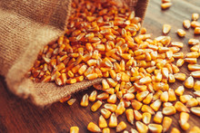 Harvested Corn Kernels Spillin...
