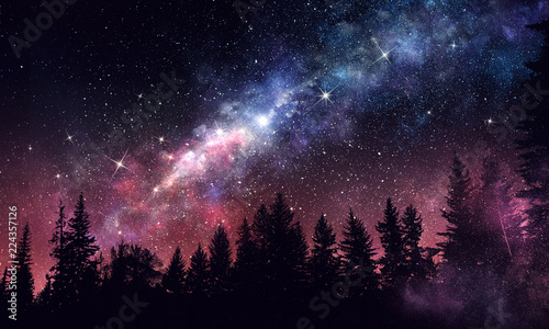 Fotografiet Night forest scene