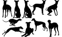 Greyhound Dog Svg Files Cricut...