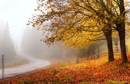 Aluminium Prints Autumn Autumn road. Autumn landscape