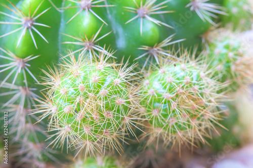Tuinposter Cactus Cactus with sharp thorns.