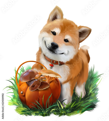 Dog Shiba Inu and a basket of mushrooms Canvas Print