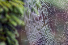 Closeup Of A Cobweb Cowered With Dew Drops