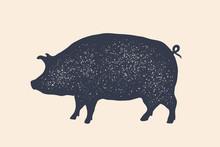 Pig, Pork. Vintage Logo, Retro...