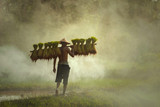 Rolnik sadzi ryż w polach przeciw wiosny zieleni tłu. Pojęcie ekologii na polach ryżowych. - 224394740