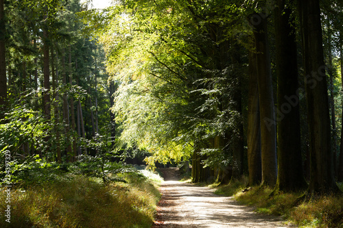 Wall Murals Forest Nature