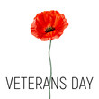 Veterans day card with poppy flower. Watercolor poppy. Vector.