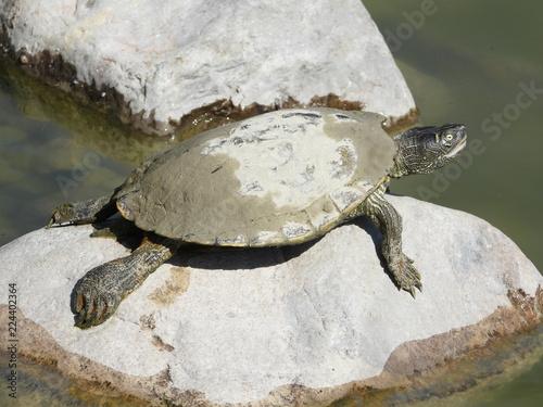 Fotobehang Schildpad Tortue