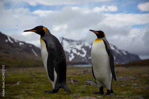 Papiers peints Pingouin penguin in the arctic