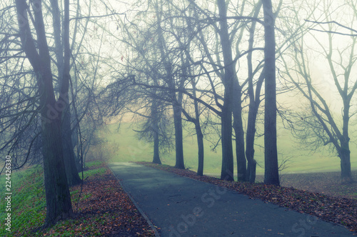 Fotobehang Olijf Autumn landscape - somber autumn park alley with bare trees and dry fallen orange autumn leaves in the fog