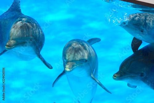 Fotografía Close up of dolphins underwater