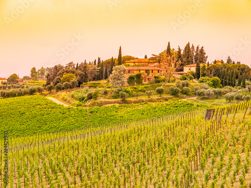 Deurstickers Honing Vineyards of Chianti. Warm sunset in beautiful Tuscan landscape, Italy.