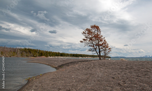 In de dag Donkergrijs Tree on narrow peninsula of sand called Hard Road to Follow on the banks of Yellowstone Lake in Yellowstone National Park in Wyoming United States
