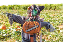 Halloween Party Celebration With A Close Up Of A Fun Friendly Green Face Witch Scarecrow In A Pumpkin Patch With Pumpkin Patch Sign