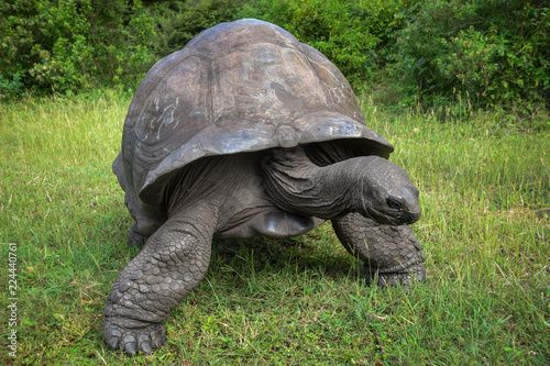 Schildkröte, Alt, Turtel, Träge, fressen, Groß, 100 Jahre, Kenia