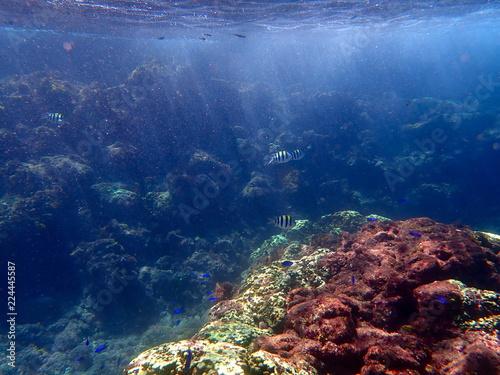 Staande foto Koraalriffen ヒリゾ浜の魚たち