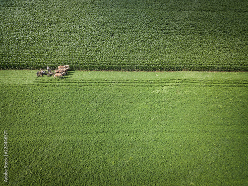Valokuvatapetti An Amish farmer and his four horse team begin to plow the corn fields for end of