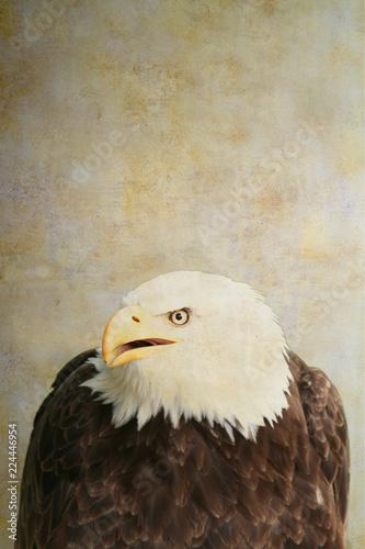 Bald eagle portrait on old paper background