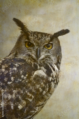 Spoed Foto op Canvas Uil Eurasian eagle-owl portrait on old paper background