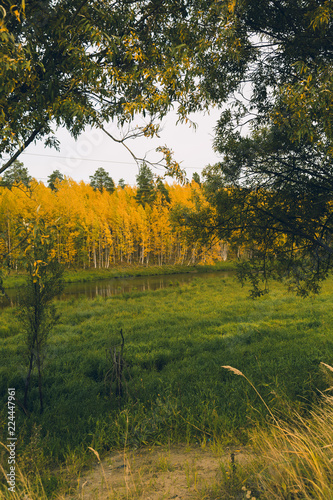 Cadres-photo bureau Arbre A birch grove with yellowed foliage along a small river
