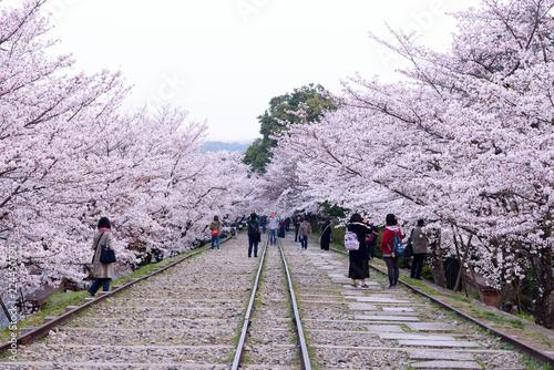 In de dag Spoorlijn 桜咲く蹴上インクライン