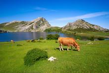 Picos De Europa Enol Lake In A...