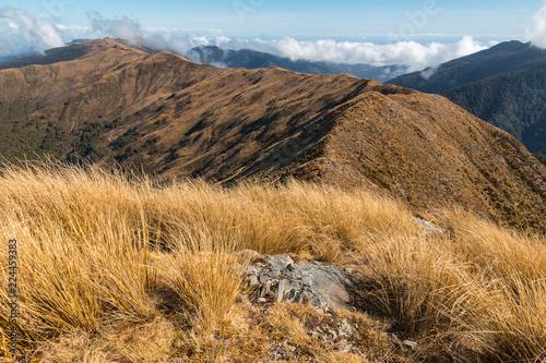 Foto op Plexiglas Oceanië Paparoa Ranges in Paparoa National Park, West Coast, South Island, New Zealand