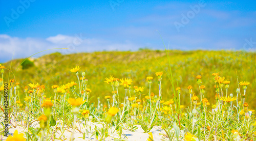Spoed Foto op Canvas Weide, Moeras field of yellow flowers