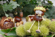 Chestnuts  Figure Sitting On C...