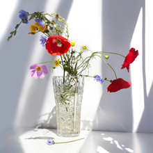 Bright Beautiful Bouquet Of Simple Field Flowers Chamomile Poppies Red White Blue Purple Green In A Crystal Vase With Water On A White Table Background Morning Contrasts Sunlight And Shadows