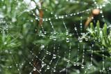 Fototapeta Fototapety do łazienki - krople deszczu w pajęczej sieci